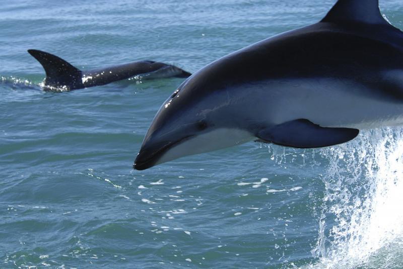 nantes, génération écologie 44, dauphins, pêche industrielle, cétacés